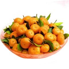 砂糖橘 冰糖橘 500g(±15g)