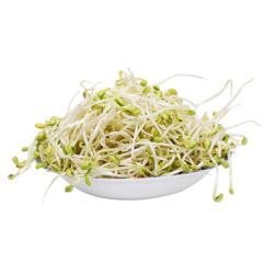 新鲜 鲜嫩豆芽 配菜 约500g