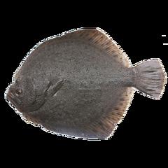 多宝鱼 一条 鲜活 (活鱼处理前重量!) 一斤以上(约600g)