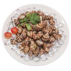 活冻野生花螺 贝壳/贝类 鲜活花螺(预定) 约500g