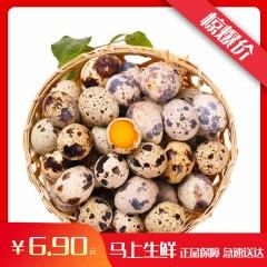 生鹌鹑蛋  营养辅食 约500g