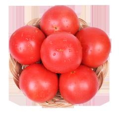 西红柿 番茄 500g(±40g)