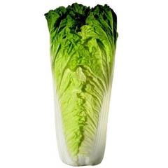 玉白菜  新鲜蔬菜 约500g